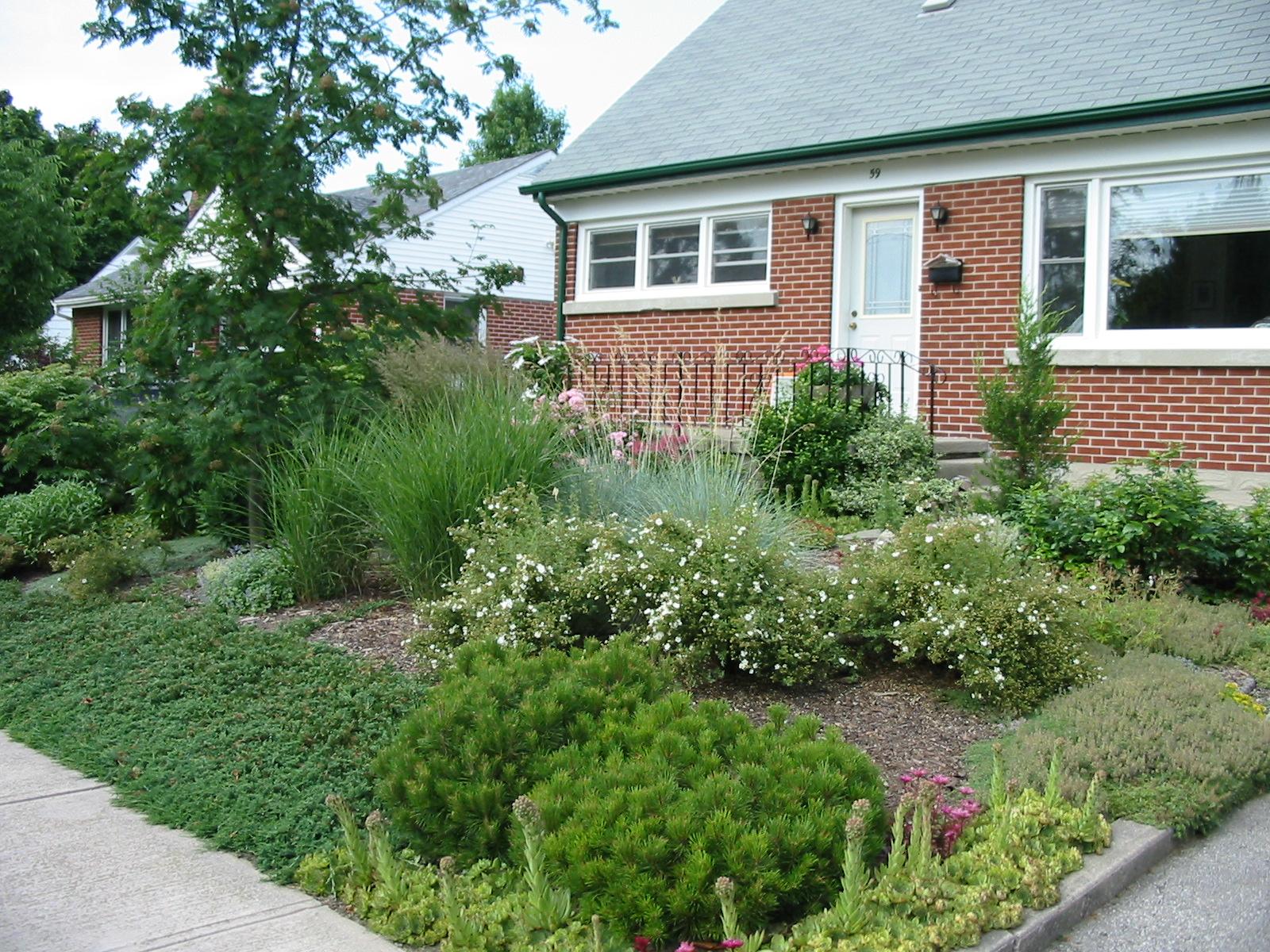 Lawn alternatives robin aggus natural landscaping for Natural grasses for landscaping